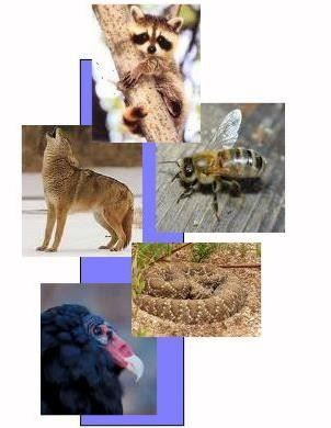 Collage of wildlife photos including a raccoon, coyote, bee, snake, and vulture